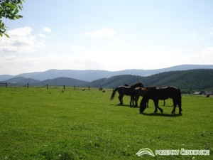 Pozemky Čenkovice - Buková hora a Suchý vrch